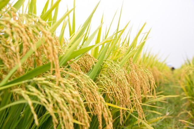 Vinaseed - Hướng đi mới của ngành nông nghiệp Việt - Ảnh 1.