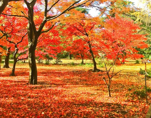 Những địa điểm ngắm mùa thu tuyệt đẹp ở châu Á - Ảnh 1.