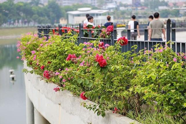 Cận cảnh công viên gần 300 tỷ nằm trên đất vàng tại Thanh Xuân - Hà Nội vừa mở cửa - Ảnh 5.