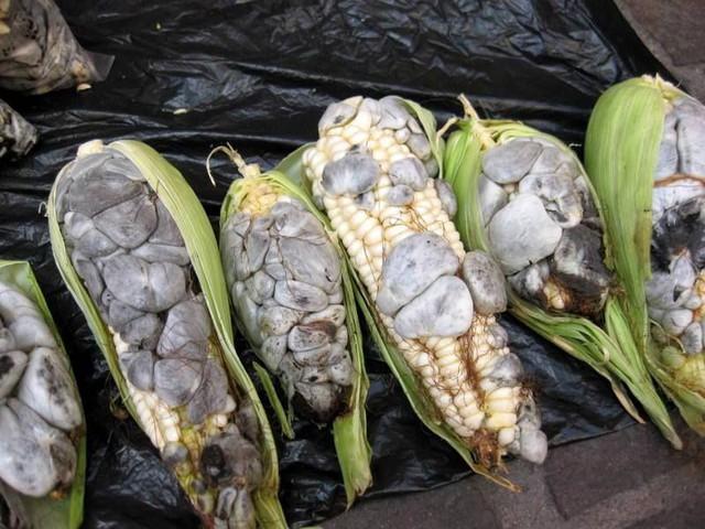 Ẩm thực lạ bốn phương: Đặc sản ngô mốc đen xì của người Mexico - Ảnh 1.