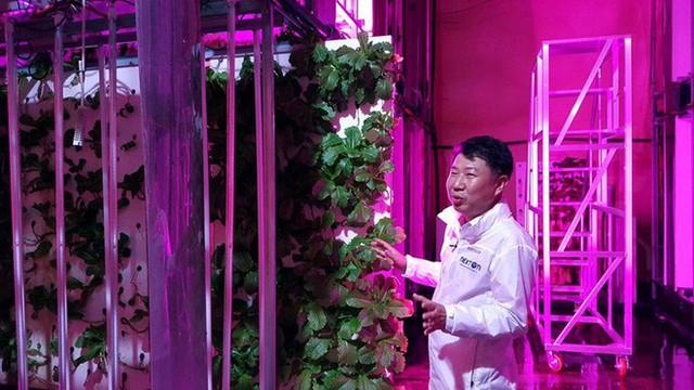 Hàn Quốc biến hầm đường bộ bỏ hoang thành trang trại rau sạch lớn nhất thế giới, tham vọng hồi sinh nền nông nghiệp - Ảnh 1.