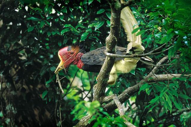 """Nước mắt chim Tê Điểu: """"Báu vật sống"""" bị săn lùng vì có chiếc mỏ đắt gấp 3 lần ngà voi - Ảnh 4."""