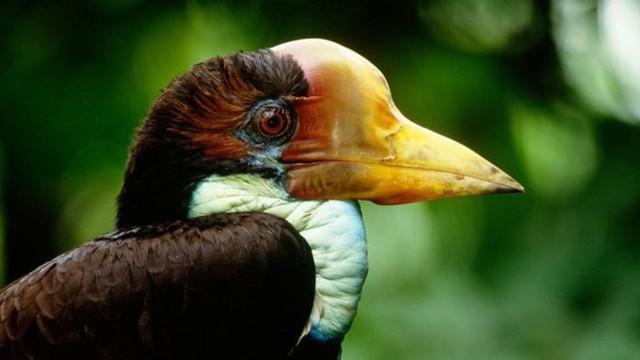 """Nước mắt chim Tê Điểu: """"Báu vật sống"""" bị săn lùng vì có chiếc mỏ đắt gấp 3 lần ngà voi - Ảnh 9."""