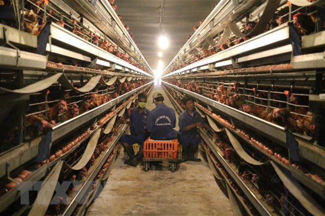 Nông nghiệp thông minh: Tạo chuỗi giá trị sản xuất khép kín - Ảnh 3.