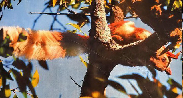 Ghé khu rừng Ấn Độ thăm loài sóc sặc sỡ nhất hành tinh: lòe loẹt như tranh vẽ - Ảnh 4.