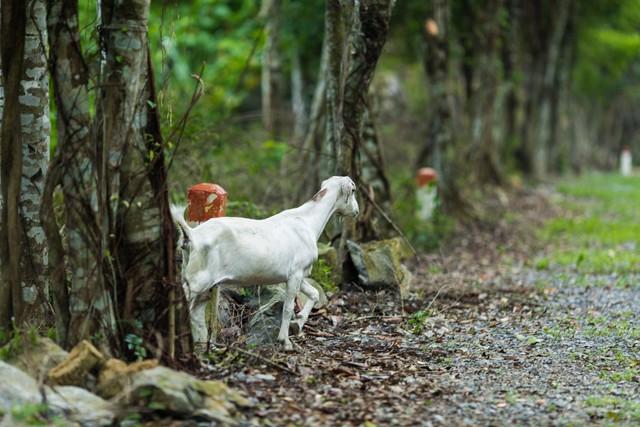 đầu tư giá trị - 156a3448 1535939116299685181383 - Ngỡ ngàng cảnh đẹp ở Thung Nham Ninh Bình những ngày chớm thu
