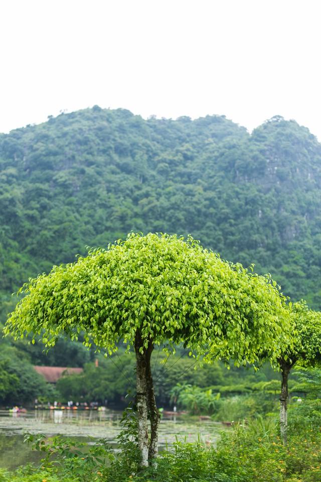 đầu tư giá trị - 156a3467 1535939116331441229957 - Ngỡ ngàng cảnh đẹp ở Thung Nham Ninh Bình những ngày chớm thu