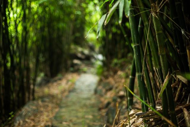 đầu tư giá trị - 156a3542 15359391164081068377873 - Ngỡ ngàng cảnh đẹp ở Thung Nham Ninh Bình những ngày chớm thu
