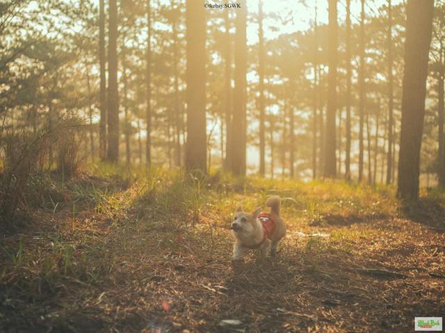 Rời bỏ phố thị, cô gái Sài Gòn lên Đà Lạt cùng bạn trai xây dựng khu vườn giữa núi rừng hoang vu dành cho thú cưng - Ảnh 4.