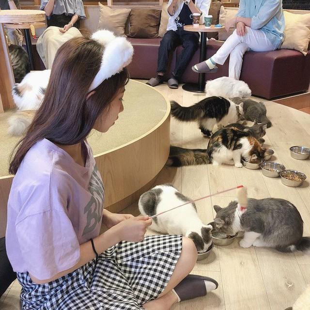 7 điều tuyệt vời ở người Nhật Bản mà ai nghe cũng cảm thấy thán phục, học hỏi ngay từ hôm nay để có cuộc sống hạnh phúc - Ảnh 8.