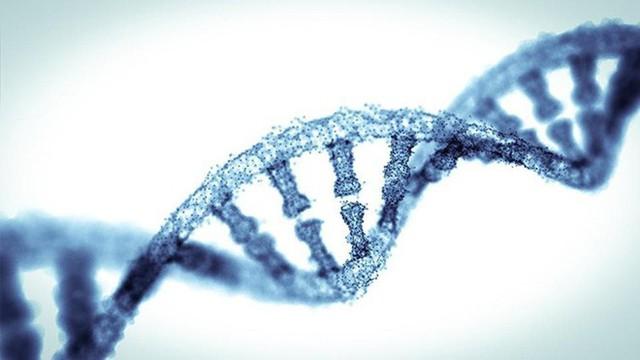 Các nhà khoa học phát hiện 52 gen thông minh quyết định 5% trí tuệ của bạn - Ảnh 2.