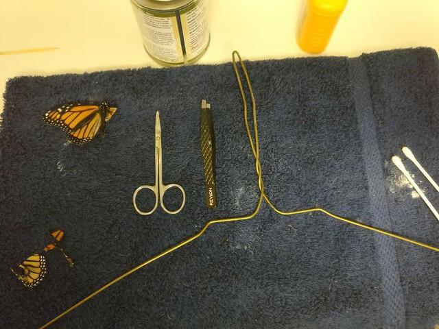Chú bướm sắp chết vì rách cánh, chỉ với vật dụng có sẵn, người phụ nữ đã làm nên ca phẫu thuật kỳ diệu - Ảnh 2.