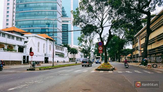 Chùm ảnh: Người Sài Gòn đặt hoa hồng trên gốc những hàng cây xanh bị đốn hạ ở đuờng Tôn Đức Thắng - Ảnh 1.