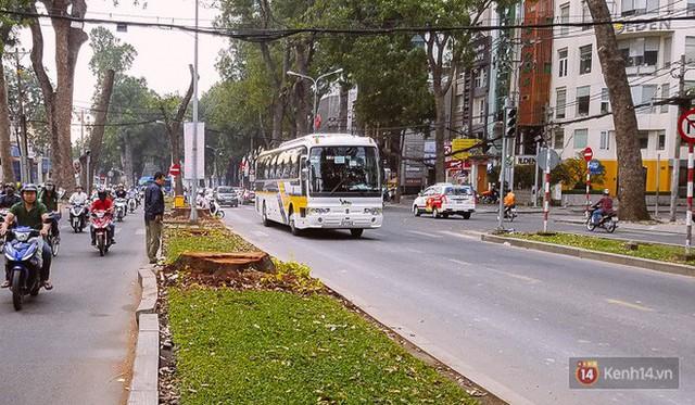 Chùm ảnh: Người Sài Gòn đặt hoa hồng trên gốc những hàng cây xanh bị đốn hạ ở đuờng Tôn Đức Thắng - Ảnh 11.