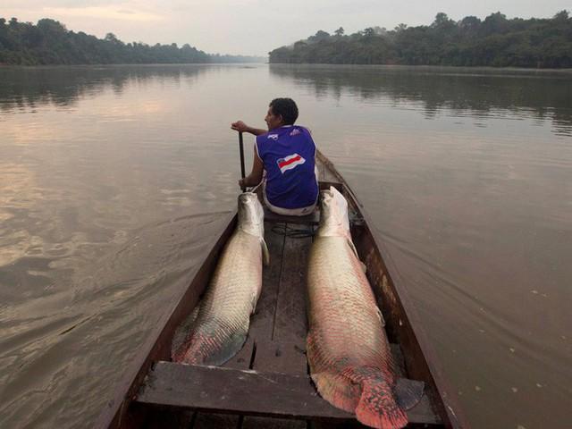 24 bức ảnh cho thấy rừng Amazon từ lá phổi xanh của thế giới đã trở thành chứng tích cho sự tàn phá của con người - Ảnh 12.