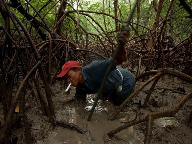 24 bức ảnh cho thấy rừng Amazon từ lá phổi xanh của thế giới đã trở thành chứng tích cho sự tàn phá của con người - Ảnh 13.