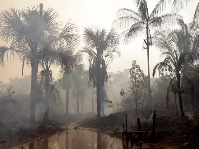 24 bức ảnh cho thấy rừng Amazon từ lá phổi xanh của thế giới đã trở thành chứng tích cho sự tàn phá của con người - Ảnh 15.