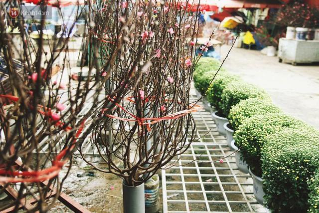 Người dân làng đào Nhật Tân: Từ giờ đến Tết mà rét thế này thì đào không nở hoa kịp mất! - Ảnh 15.