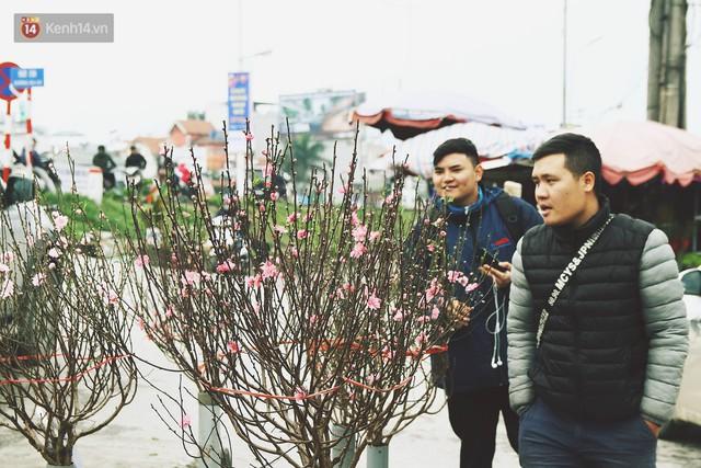 Người dân làng đào Nhật Tân: Từ giờ đến Tết mà rét thế này thì đào không nở hoa kịp mất! - Ảnh 17.