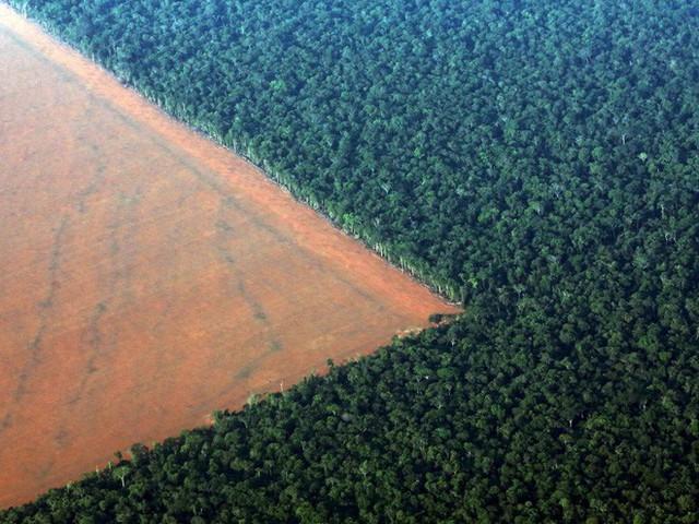 24 bức ảnh cho thấy rừng Amazon từ lá phổi xanh của thế giới đã trở thành chứng tích cho sự tàn phá của con người - Ảnh 18.