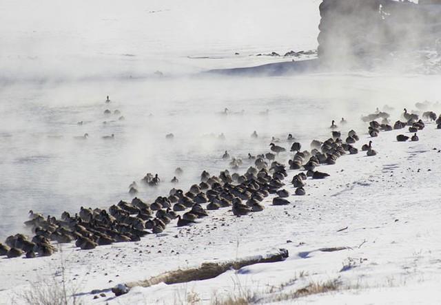 16 cảnh đóng băng giúp bạn thấu hiểu sức mạnh dữ dội của giá lạnh trời Tây - Ảnh 3.