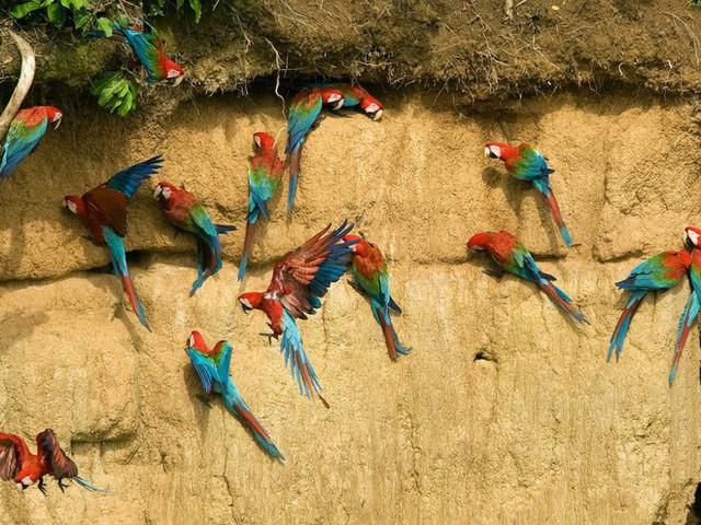 24 bức ảnh cho thấy rừng Amazon từ lá phổi xanh của thế giới đã trở thành chứng tích cho sự tàn phá của con người - Ảnh 5.
