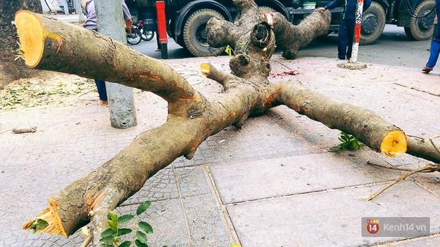 Chùm ảnh: Người Sài Gòn đặt hoa hồng trên gốc những hàng cây xanh bị đốn hạ ở đuờng Tôn Đức Thắng - Ảnh 5.