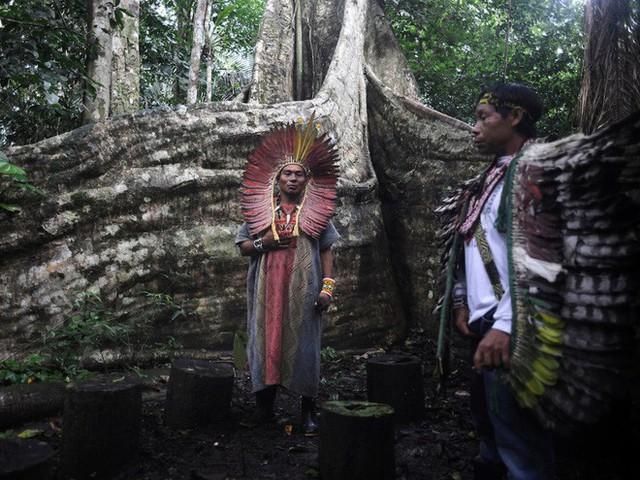 24 bức ảnh cho thấy rừng Amazon từ lá phổi xanh của thế giới đã trở thành chứng tích cho sự tàn phá của con người - Ảnh 8.