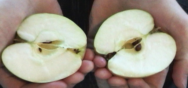 Không chỉ bẻ đôi Qatar, cư dân mạng khắp thế giới cũng đang xôn xao suốt 24h qua vì truyền thuyết Ai là người Việt cũng có khả năng bẻ đôi trái táo? - Ảnh 1.