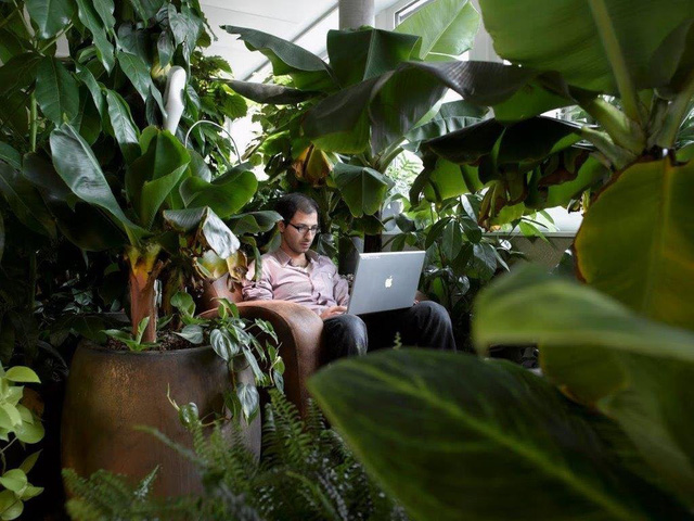 the-meeting-rooms-on-the-campus-are-arranged-according-to-different-themes-there-are-about-100-different-plants-in-the-jungle-lounge-1516006669438.jpg