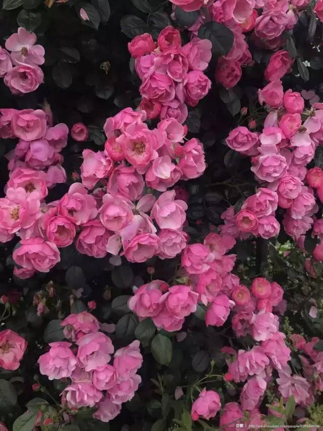 Cô gái xinh đẹp thoát khỏi trầm cảm nhờ làm vườn, biến mảnh đất 1300m² thành nơi vạn người muốn sống - Ảnh 16.