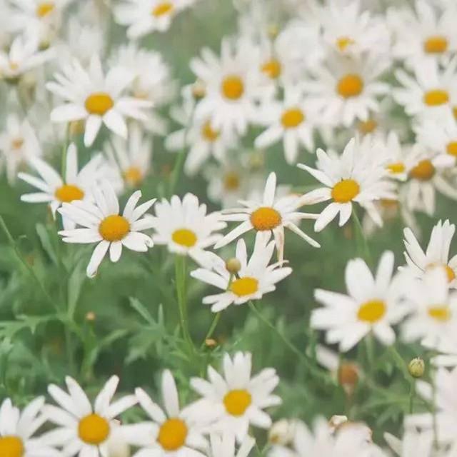 Cô gái xinh đẹp thoát khỏi trầm cảm nhờ làm vườn, biến mảnh đất 1300m² thành nơi vạn người muốn sống - Ảnh 17.