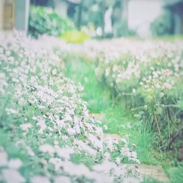 Cô gái xinh đẹp thoát khỏi trầm cảm nhờ làm vườn, biến mảnh đất 1300m² thành nơi vạn người muốn sống - Ảnh 18.