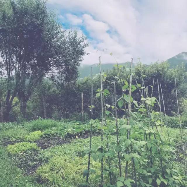 Cô gái xinh đẹp thoát khỏi trầm cảm nhờ làm vườn, biến mảnh đất 1300m² thành nơi vạn người muốn sống - Ảnh 20.