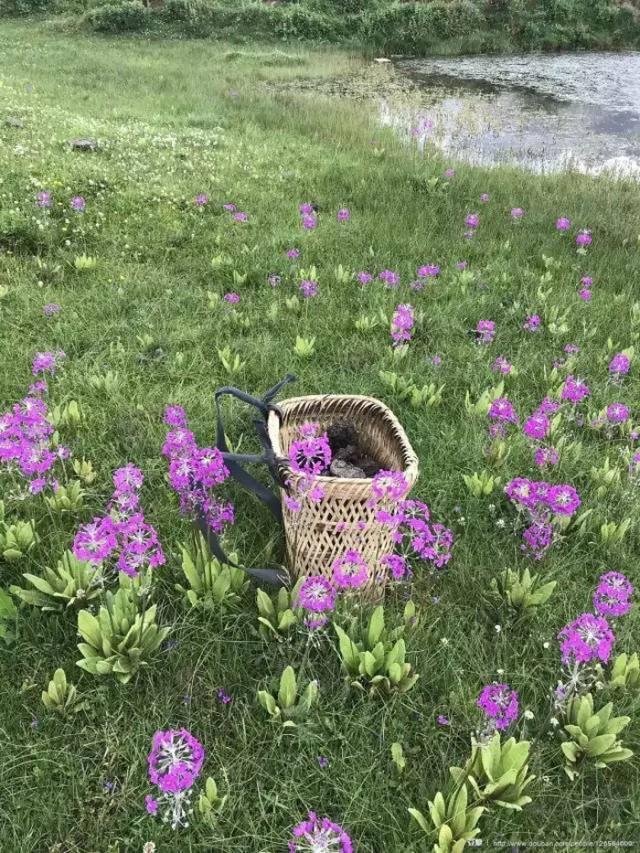 Cô gái xinh đẹp thoát khỏi trầm cảm nhờ làm vườn, biến mảnh đất 1300m² thành nơi vạn người muốn sống - Ảnh 23.