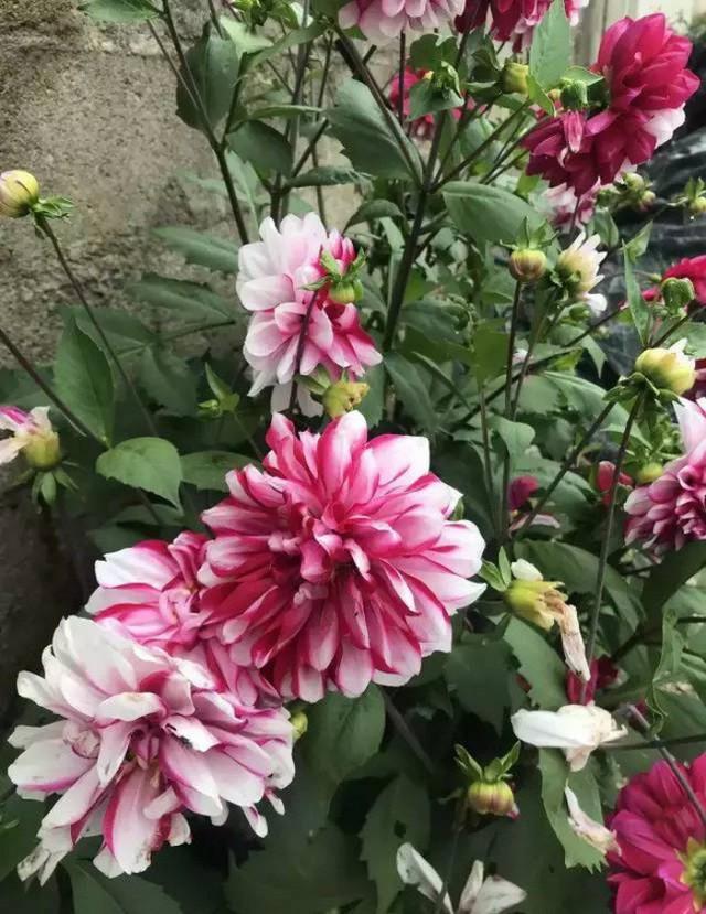 Cô gái xinh đẹp thoát khỏi trầm cảm nhờ làm vườn, biến mảnh đất 1300m² thành nơi vạn người muốn sống - Ảnh 9.
