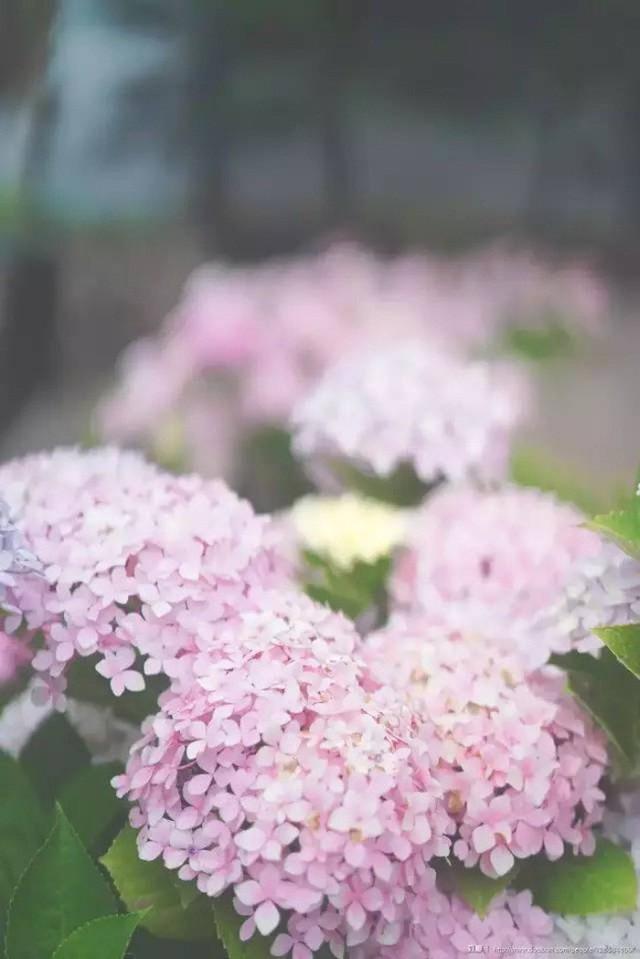 Cô gái xinh đẹp thoát khỏi trầm cảm nhờ làm vườn, biến mảnh đất 1300m² thành nơi vạn người muốn sống - Ảnh 10.