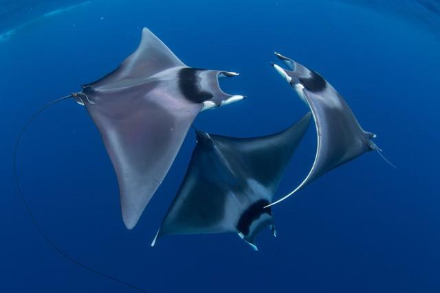Như lạc vào thế giới khác với chùm ảnh đại dương đẹp nhất năm 2018 - Ảnh 2.