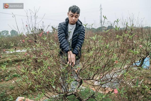Gần 200 gốc đào của người dân Bắc Ninh bị chặt phá trong đêm: Tết năm nay còn chả có bánh chưng mà ăn - Ảnh 13.
