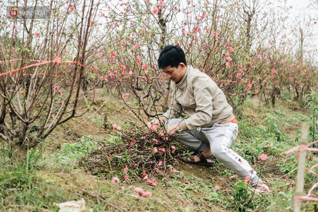 Gần 200 gốc đào của người dân Bắc Ninh bị chặt phá trong đêm: Tết năm nay còn chả có bánh chưng mà ăn - Ảnh 15.