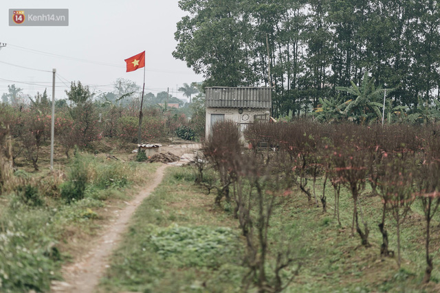 Gần 200 gốc đào của người dân Bắc Ninh bị chặt phá trong đêm: Tết năm nay còn chả có bánh chưng mà ăn - Ảnh 19.