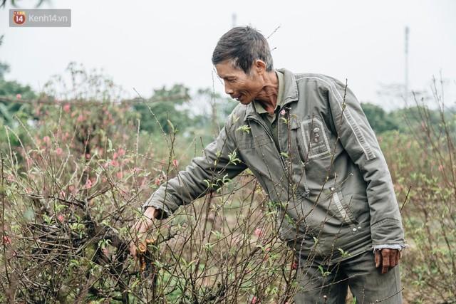 Gần 200 gốc đào của người dân Bắc Ninh bị chặt phá trong đêm: Tết năm nay còn chả có bánh chưng mà ăn - Ảnh 8.