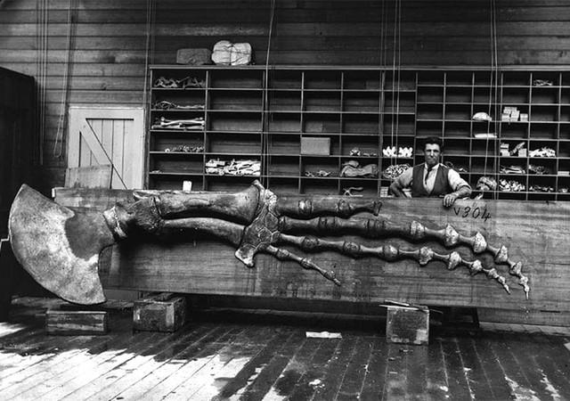Lần đầu công bố ảnh những sinh vật to lớn kì bí ở Úc hơn 150 năm trước - Ảnh 1.