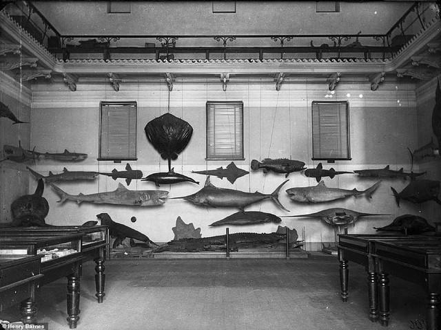 Lần đầu công bố ảnh những sinh vật to lớn kì bí ở Úc hơn 150 năm trước - Ảnh 5.