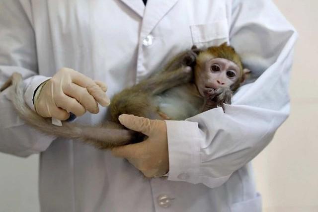 Các nhà khoa học Trung Quốc lại vừa nhân bản thành công 5 con khỉ biến đổi gen đầu tiên trên thế giới - Ảnh 2.