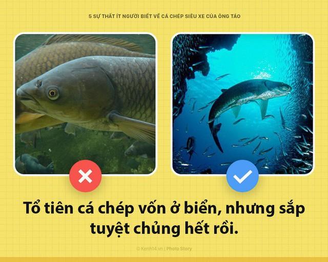 Xin chào! Tôi là cá chép, siêu xe hàng năm của Ông Công, Ông Táo đây - Ảnh 1.