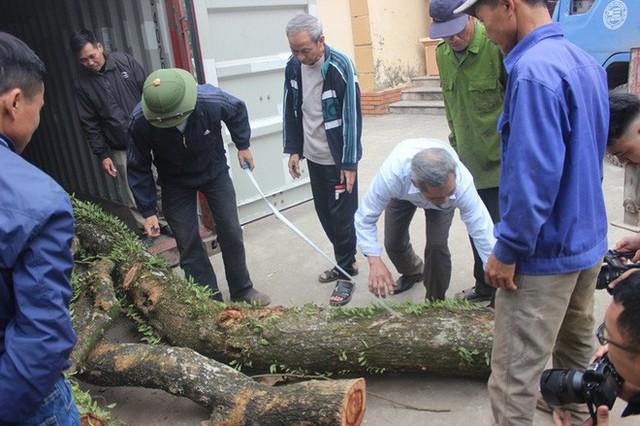 Chặt cây sưa trăm tỷ ở Hà Nội: Chẻ đôi khúc rễ, dân làng mất ngay chục tấn thóc - Ảnh 1.