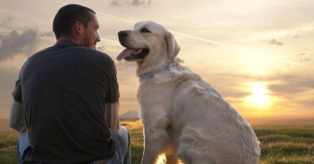 Nghiên cứu khoa học: Nuôi chó sẽ tăng khả năng thành công của doanh nghiệp - Ảnh 1.