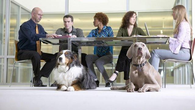 Nghiên cứu khoa học: Nuôi chó sẽ tăng khả năng thành công của doanh nghiệp - Ảnh 2.
