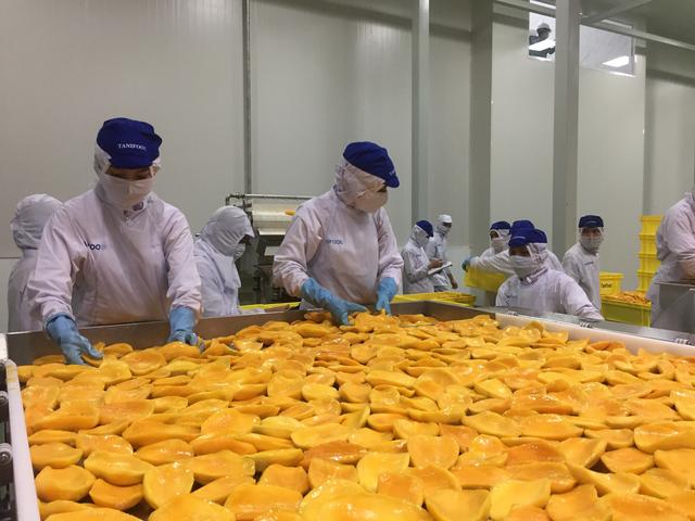 Bộ trưởng Nông nghiệp Nguyễn Xuân Cường: Xuất khẩu rau quả năm 2018 đạt 3,8 tỷ USD nhưng mhững cơ sở chế biến rau quả của Việt Nam còn rất ít - Ảnh 1.